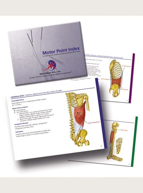 Sports Medicine Acupuncture Products: Motor Point Index by AcuSport Education | SportsMedicineAcupuncture.com