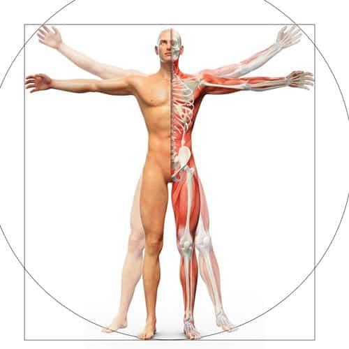 AcuSport Education's Sports Medicine Acupuncture Certification Program | SportsMedicineAcupuncture.com