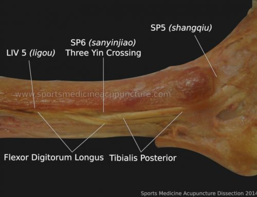Anatomy of SP 4 (Gongsun) and Balance of the Medial Arch