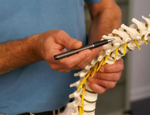 Reviews of SMAC Online Webinar — Module One: The Spinal Column Anatomy/Palpation/Cadaver Workshop